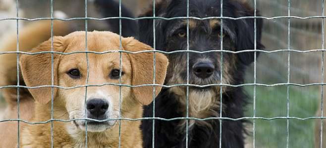 Le Parti Laval critique l'annonce  du « nouveau règlement municipal concernant les animaux »
