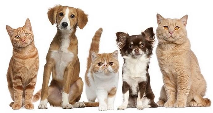 Propriétaires d'animaux criminalisés par le nouveau règlement animalier de Laval