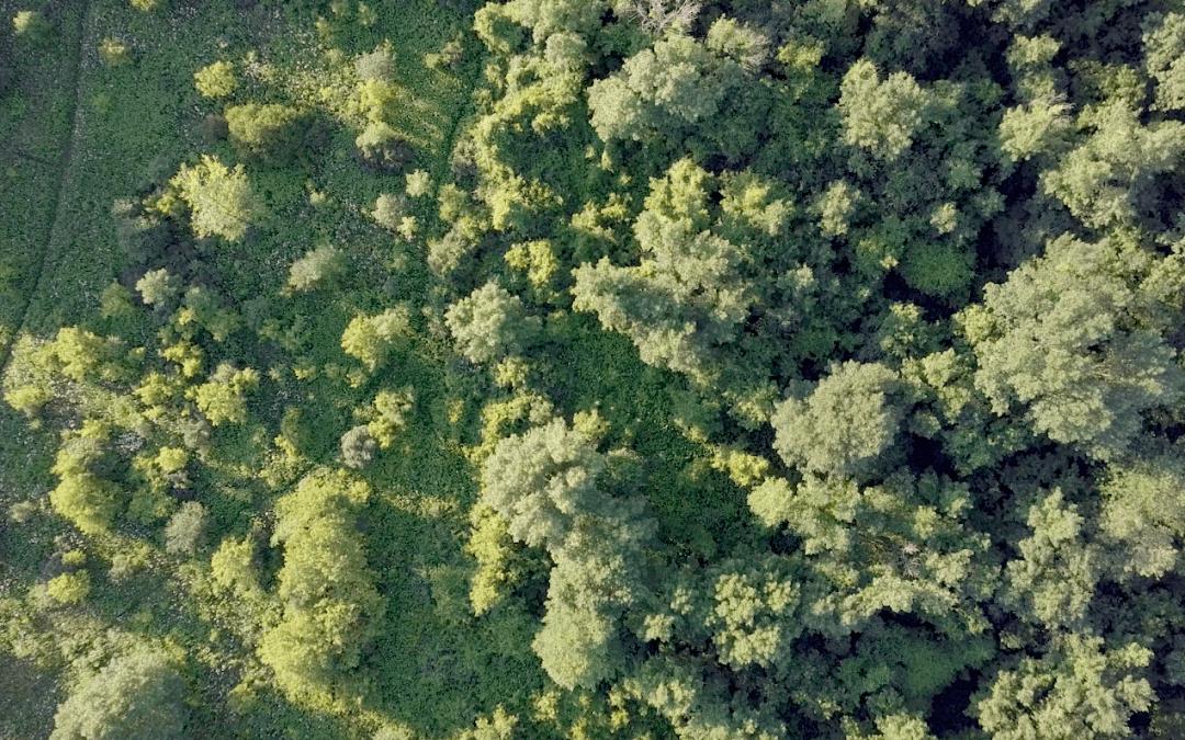 Une division des parcs et espaces verts pour Laval