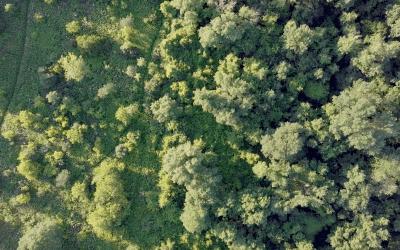 Une division des parcs et espaces verts pour Laval  Nouvelles Capture d   e  cran 2017 10 23 a   15
